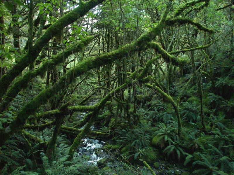 дождевый лес стоковое фото