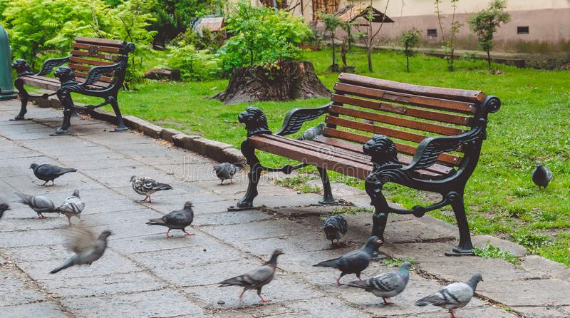 Дождливый день в Львове Дезертированный парк, влажные стенды сада и голуби стоковое фото