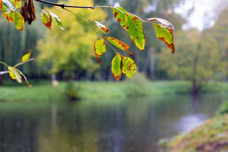 Дождь в парке в начале осени Деревья над рекой в парке города Khmelnitsky_ стоковое фото