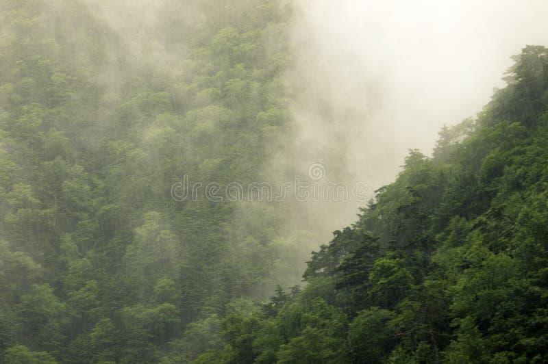 Дождь в пуще горы стоковая фотография rf