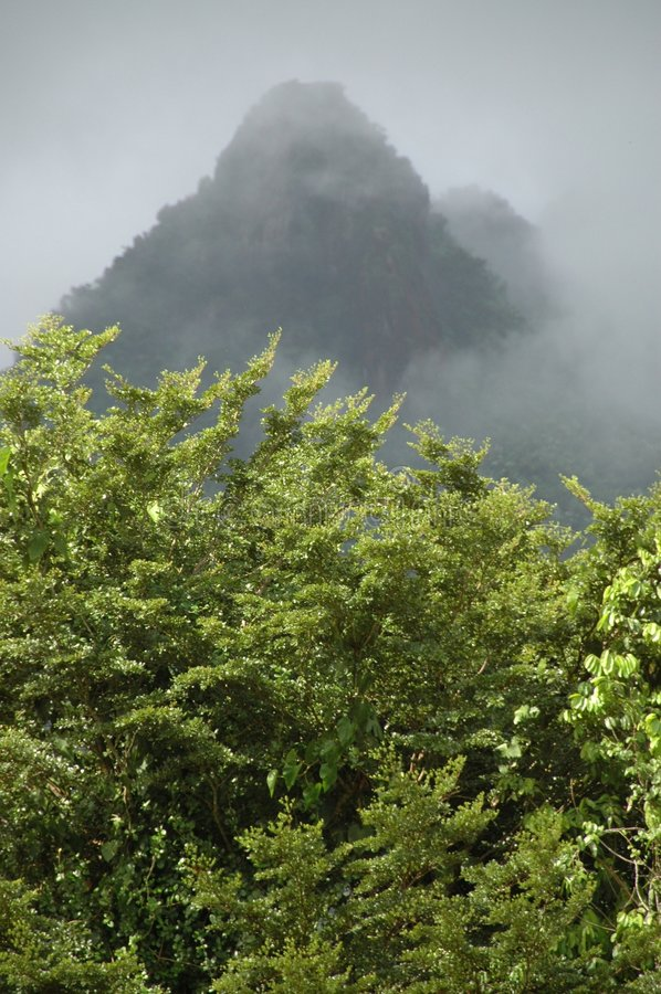 дождь горы пущи стоковые фото
