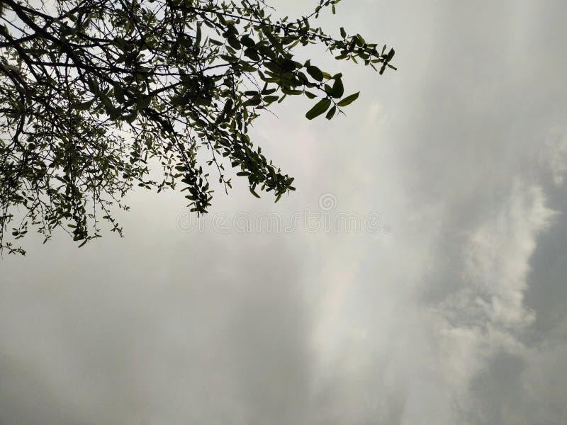 Дождь дерева выходит луч и блеск неба стоковые изображения