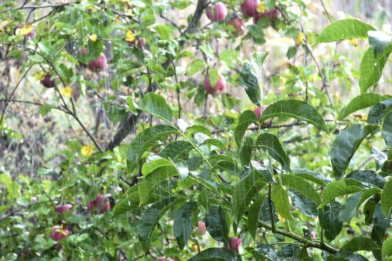 Дождь лета в саде стоковые фотографии rf