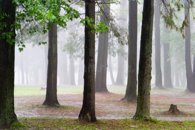 дождь пущи стоковые изображения