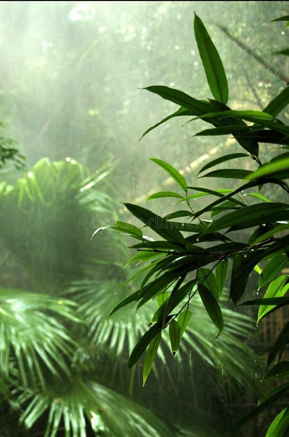 дождь пущи стоковое фото