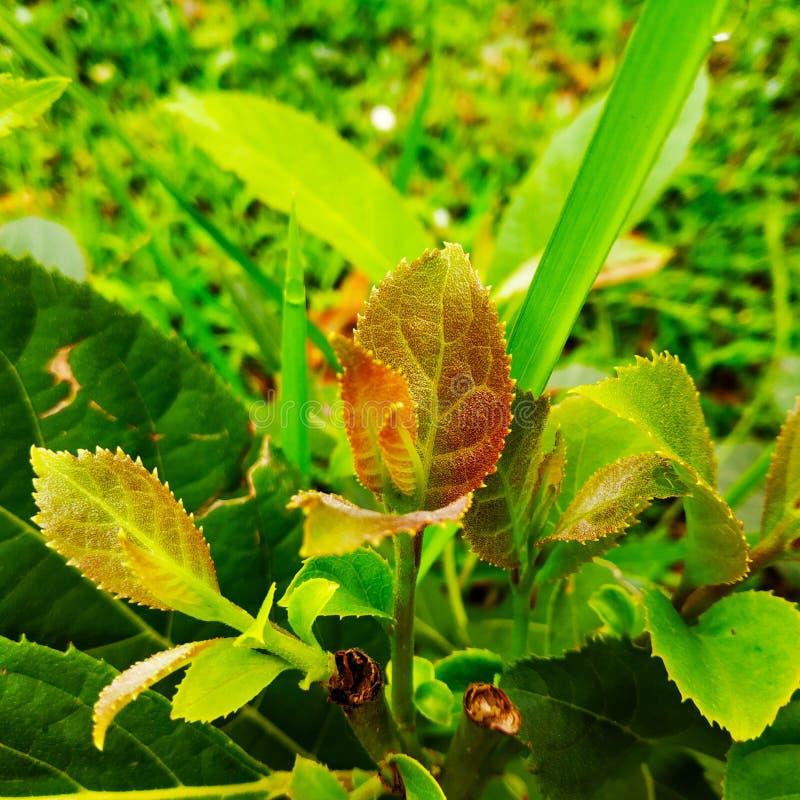 Небольшое зеленое растение стоковые фото