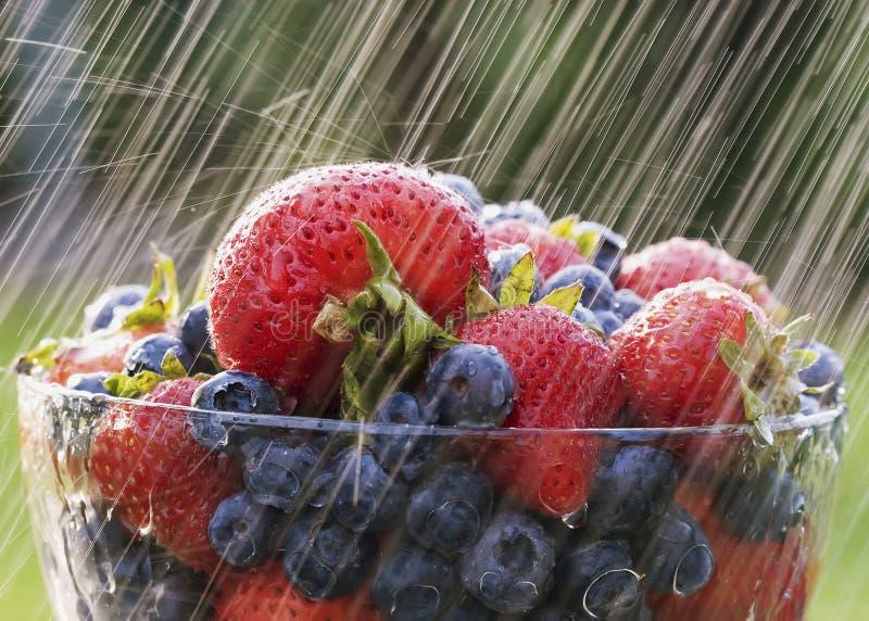 дождь ягод стоковые изображения rf