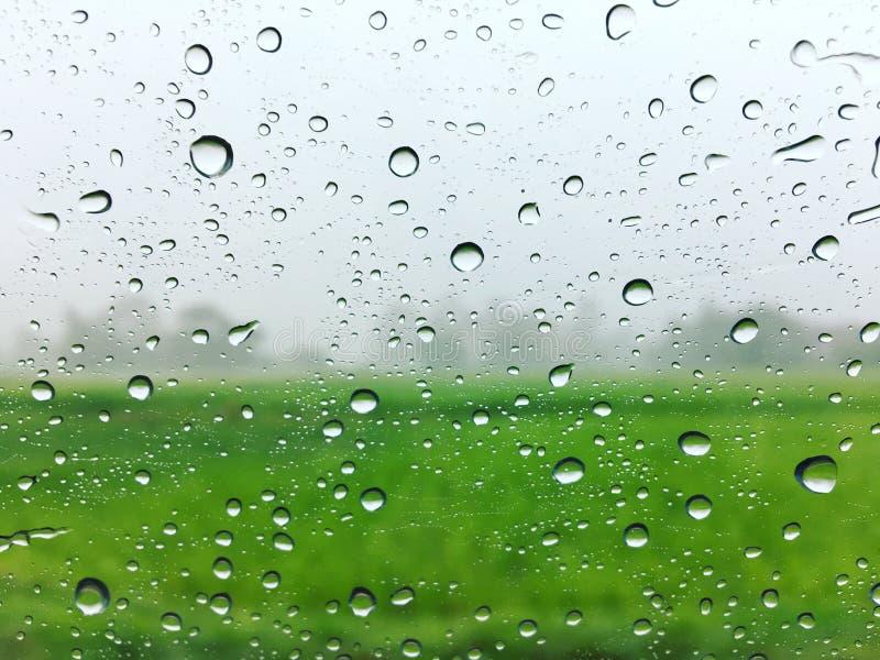 дождь стоковое изображение