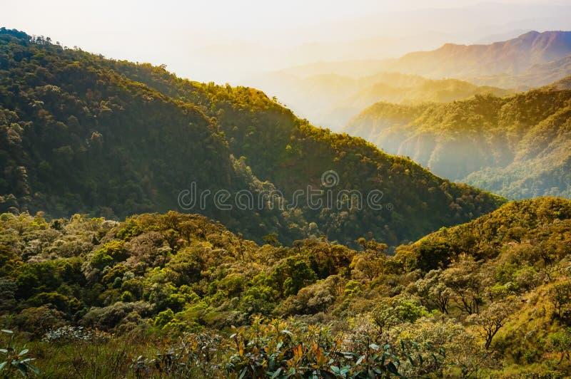 Дождевой лес на горе и долине позади в Tak, Таиланде стоковая фотография