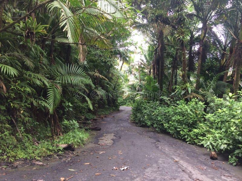 Дождевой лес El Yunque стоковое изображение rf