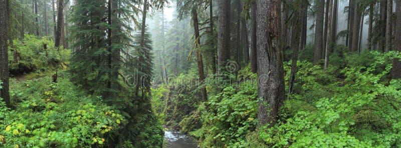 Дождевой лес Hoh стоковое изображение