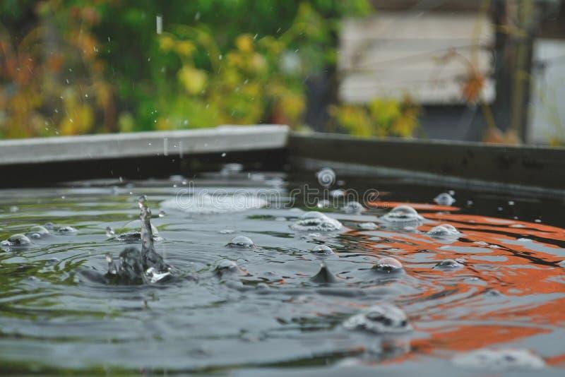 Дождевые капли на воде стоковая фотография rf