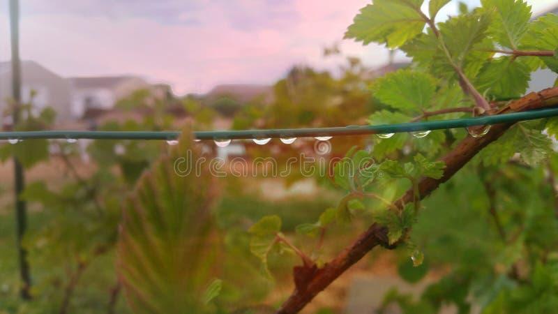 Дождевые капли на полениках стоковые фотографии rf