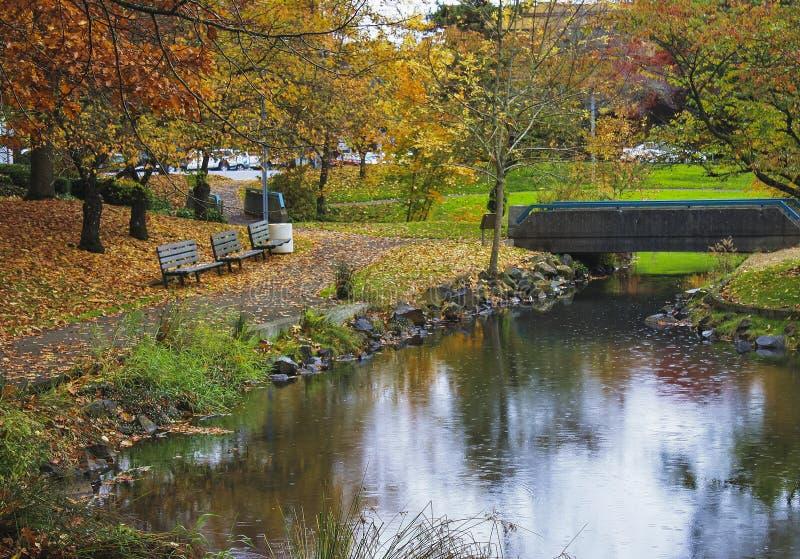 Дождливый день в парке города осени стоковые фотографии rf