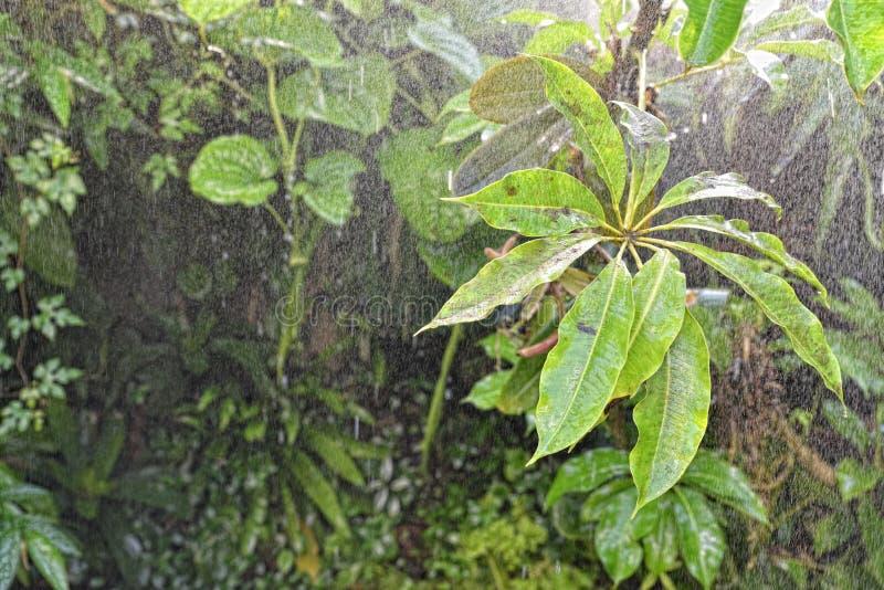 Дождь в тропической предпосылке тропического леса стоковые фотографии rf