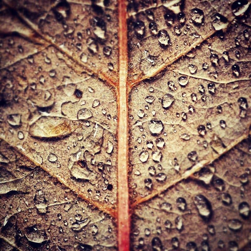 Дождь осени