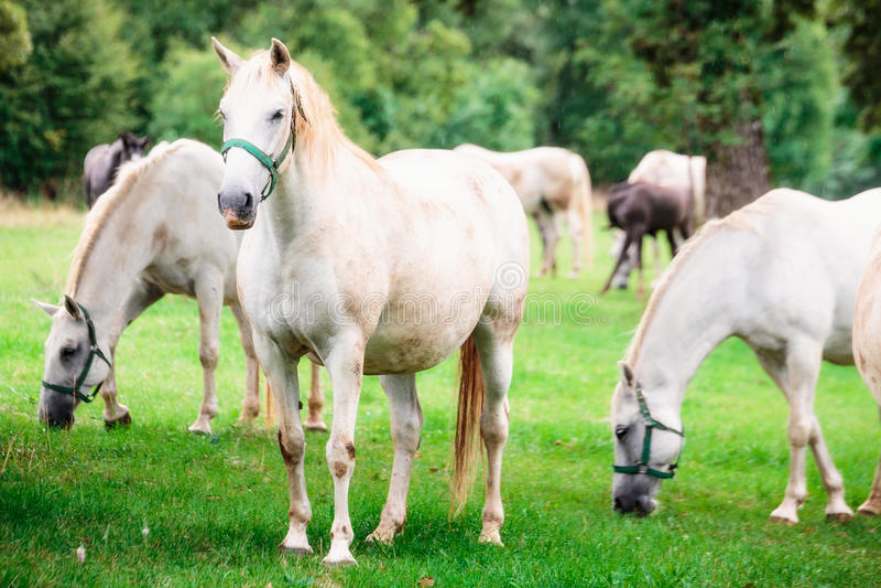 Дождь undrer лошадей Анджела стоковое изображение rf
