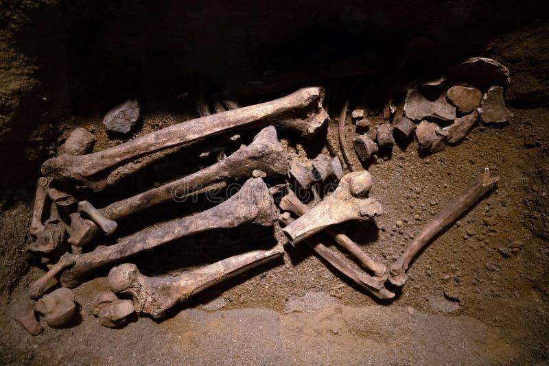 Доисторические человеческие остатки косточки Старый скелет открытый археологами, ученый анализируя и проводя исследование исследо стоковое фото rf