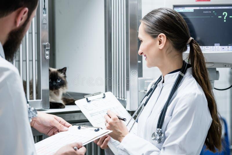 Доктора ветеринара на посещении круглом в ICU зооветеринарной клиники стоковое фото