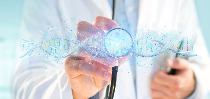 Доктор держа 3d представляет ДНК стоковые фото
