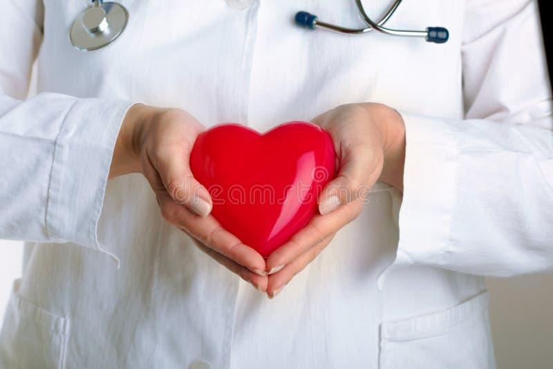 Доктор держа красное сердце стоковое изображение rf