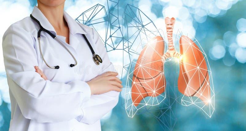 Доктор показывает человеческие легких стоковое изображение rf