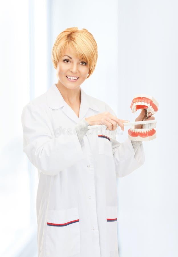 Доктор с зубной щеткой и челюстями стоковое фото rf
