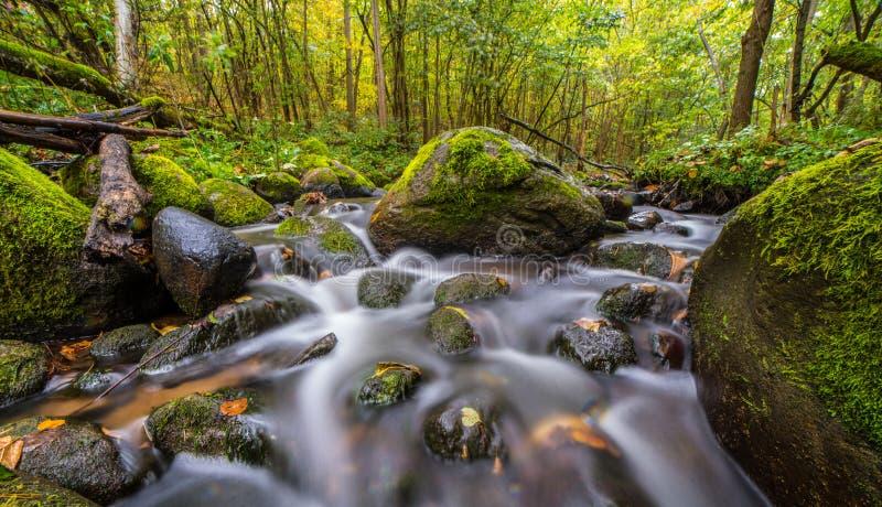 Долгая выдержка воды пропуская в лесе стоковые фотографии rf