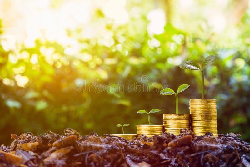 Долгосрочные инвестиции или деньги делать с правыми концепциями Выращивание растения на стоге монеток на хорошей почве с солнечны стоковое изображение