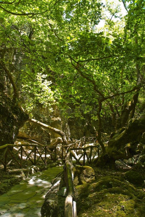 долина бабочек стоковая фотография rf