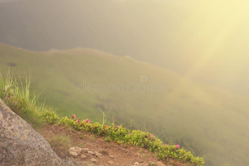 Долина горы во время восхода солнца Естественный ландшафт лета стоковое изображение rf