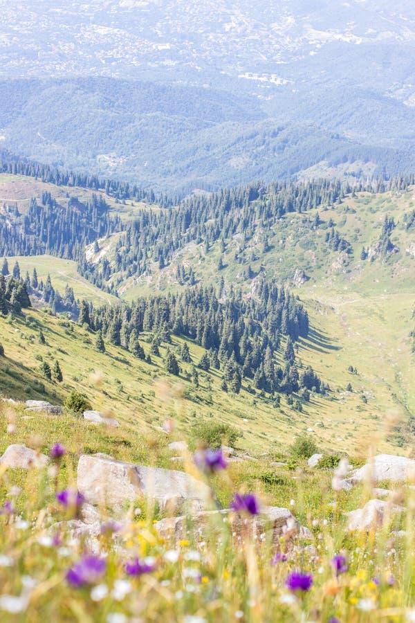 Долина горы летом, Алма-Ата, Казахстаном Взгляд от горного пика Kumbel стоковые фотографии rf