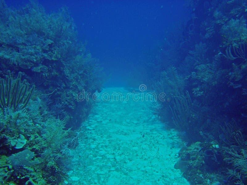долина коралла стоковое изображение