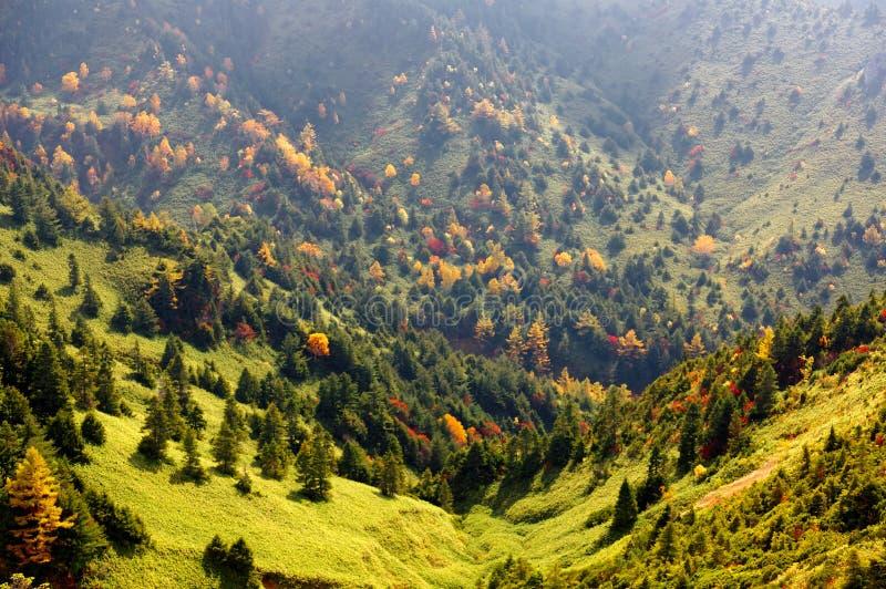 Долина осени зеленых лугов и красочных лесов в гористых местностях Shiga Kogen лыжный курорт и пешее пятно стоковое изображение