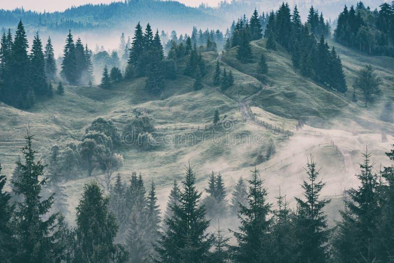 Долина прикарпатской горы после дождя стоковое фото rf