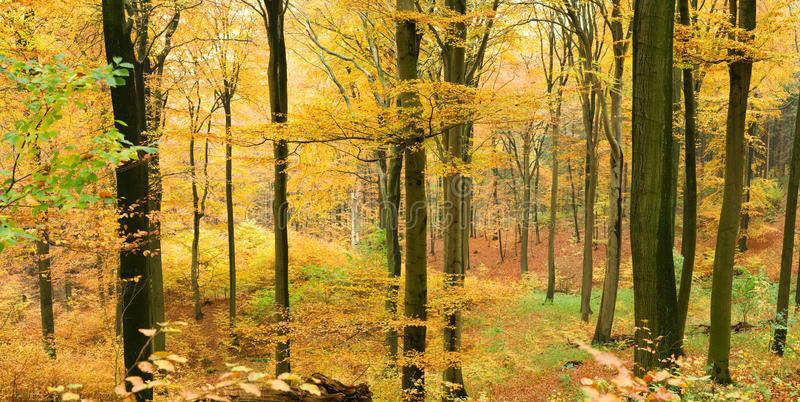 долина пущи осени стоковая фотография rf