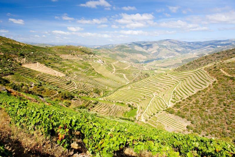 долина douro стоковые фотографии rf