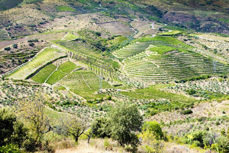 долина douro стоковые изображения