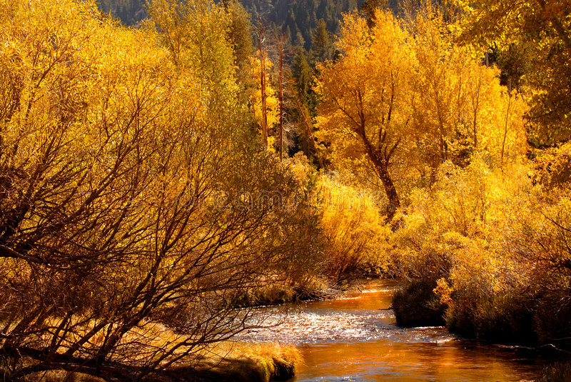 долина yosemite потока падения цветов золотистая отражая стоковое изображение rf