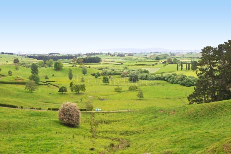 долина zealand сельскохозяйствення угодье новая стоковое фото rf