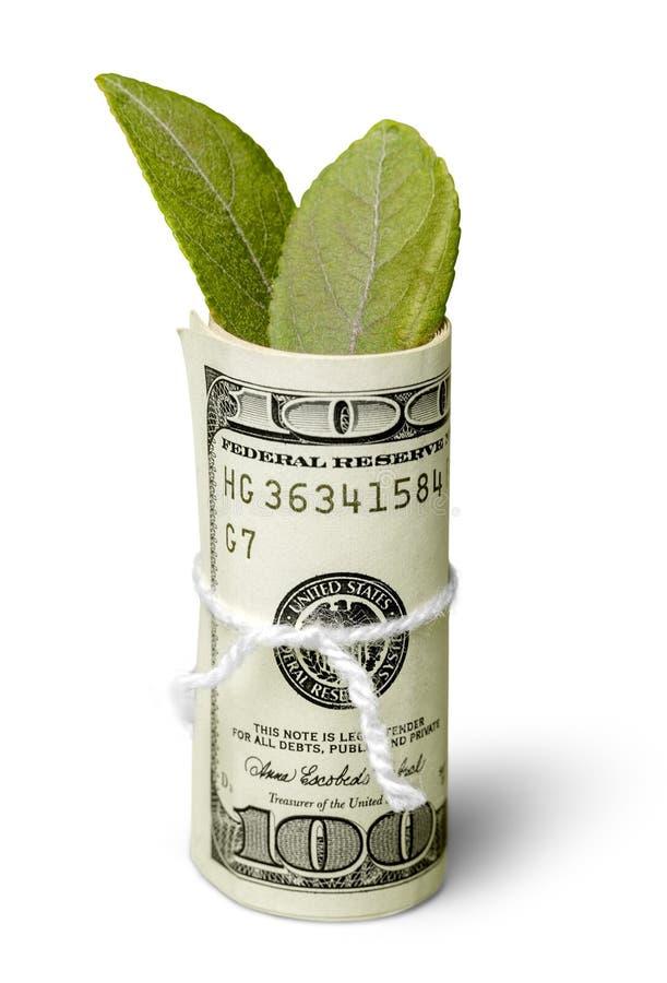 Долларовые банкноты с листьями стоковое фото