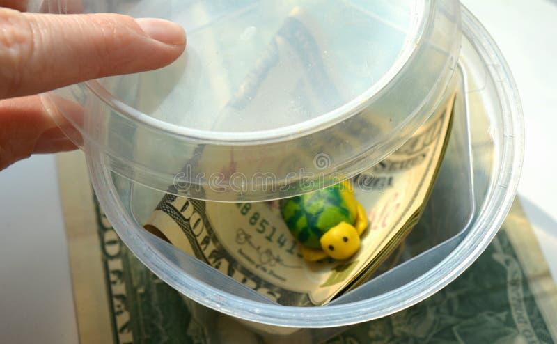 Доллары денег в предпосылке ребенка сбережений банка белой стоковые изображения rf