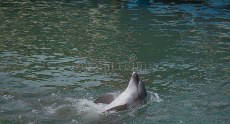 Долфин улыбается в воде. Милый дельфин улыбается стоковое изображение rf