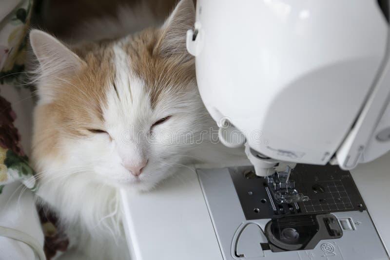 Домашнее белое бежевое рыльце лож на швейной машине Закрытые глаза : стоковая фотография rf