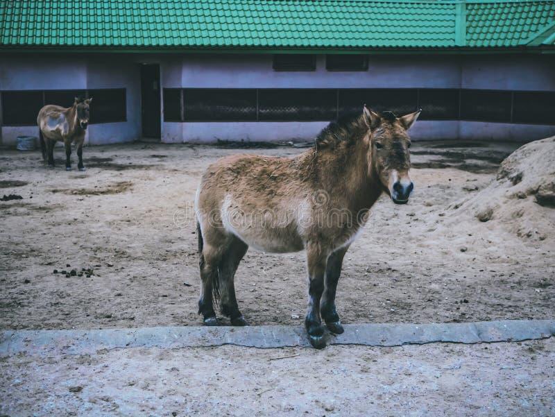 Домашние животные в конце зоопарка вверх по зоопарку обрабатывают землю лошадь леса стоковые фото