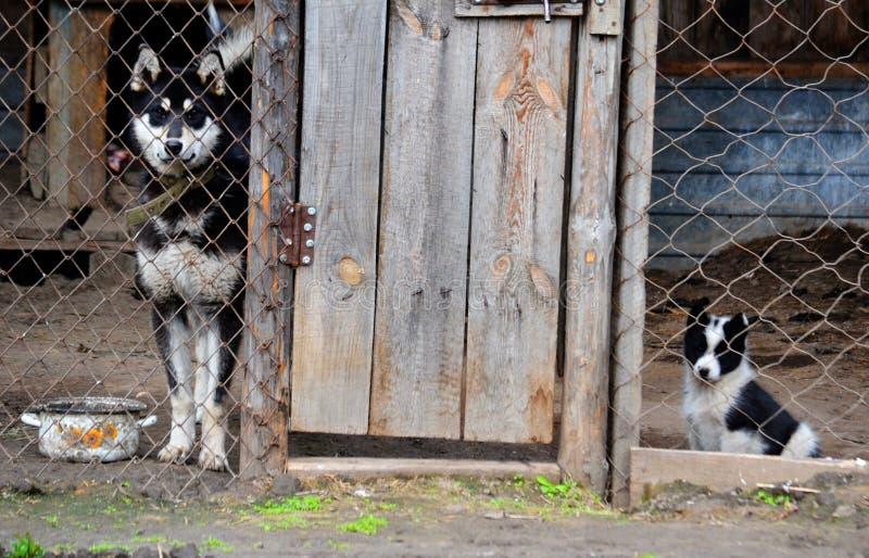 Домашние животные стоковые изображения