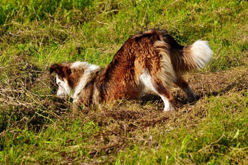 Домашние животные стоковая фотография