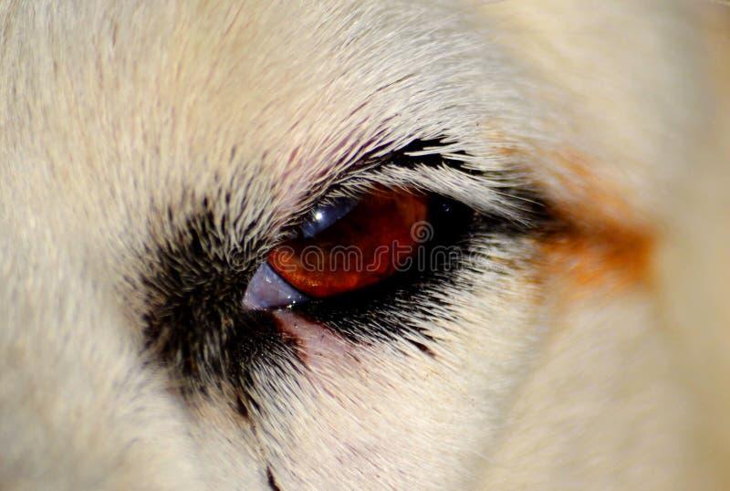 Домашние животные стоковые фотографии rf
