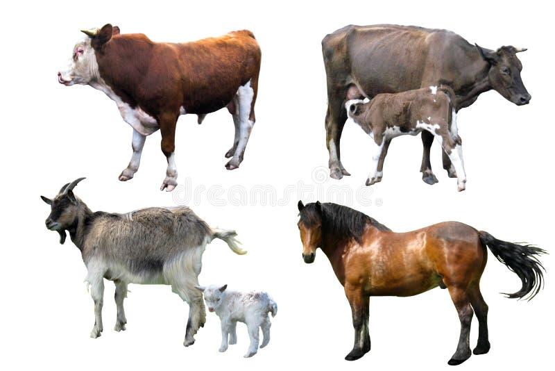 словам картинки животных свиньи лошади подарок виде букета