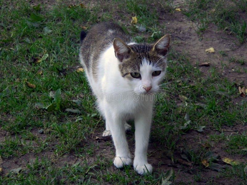Домашний кот на прогулке стоковые изображения